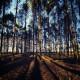 Ashdown Forest Matt Harquail Kudos Panorama